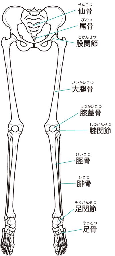 骨格の歪みイラスト
